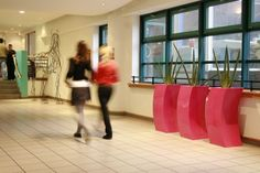 Sanseverias in hot pink curvy planters add to the arty, contemporary and 'cool' feel of Southampton Solent University UK