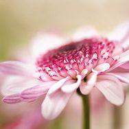Beautiful macro photography by Mirka Wolfova