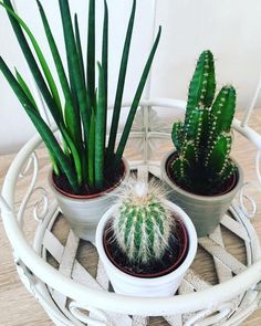 Imagem de decor, decoracao, and plantas