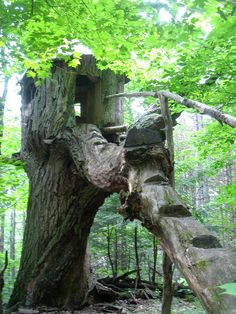 """Raven's Tree House""  It's ALL Tree!!!  So cool!"
