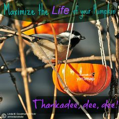 "In the spirit of Halloween, consider using your pumpkin for more than just a decoration! Fill them with seeds and give the birds a ""treat"", not a trick! Learn one way to make a pumpkin feeder by watching this video: http://www.9news.com/story/life/2014/10/16/attract-birds-to-your-backyard/17361549/"