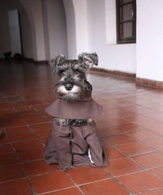 This is Friar Bigotón, a formerly stray dog and the newest member of a Franciscan brotherhood in Cochabamba.