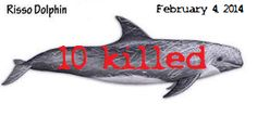 TAIJI: Risso's Dolphins February 4, 2014. 10 non-human persons slaughtered, including juveniles. https://www.facebook.com/media/set/?set=a.284253878391516.1073741893.109164785900427&type=1 #CoveGuardians #tweet4taiji #gaiatsu #SeaShepherd #defendconserveprotect