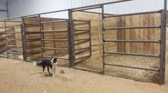Build your stalls with a combination of steel pipe stall parts and custom board walls. Cost effective and airy, these stalls are a little smarter looking than an all-pipe setup. Cattle Barn, Show Cattle, Farm Barn, Barn Stalls, Horse Stalls, Dream Stables, Dream Barn, Horse Barn Designs, Horse Barn Plans