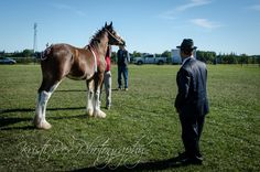 https://flic.kr/p/zhD2C6 | Fergus Fall Fair 4089 | Kristi Rex Photography
