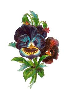 Antique Images: Free Flower Clip Art: Antique Pansy Die Cut from Victorian Scrapbook