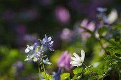 花の小道で : ふつうのコト
