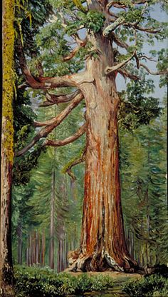 MARIANNE NORTH:    The 'Great Grisly' Big Tree of the Mariposa Grove, California