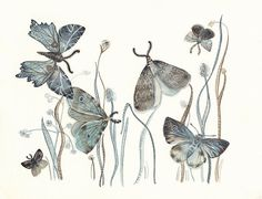Hey, I found this really awesome Etsy listing at https://www.etsy.com/listing/105429471/moths-watercolor-watercolor-painting