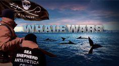 Whale Wars!!