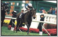 Miesque(1984)(Filly) Nureyev- Pasadoble By Prove Out. 5(C)x5(C) To Hyperion. 16 Starts 12 Wins 3 Seconds 1 Third. $2,096,517. Won 1988 BC Turf Mile Defeating Colts For The Second Year In A Row In The BC Turf, This Time Of A Heavy And Yielding Turf Course. Jocket Freedie Head- Trainer Francis Boutin- Owner Flaxman Holdings.