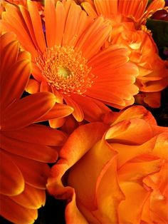 Orange flowers this what your looking for Bec lol