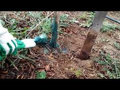 YouTube Garden Tools, Gardening, Youtube, Yard Tools, Lawn And Garden, Youtubers, Youtube Movies, Horticulture