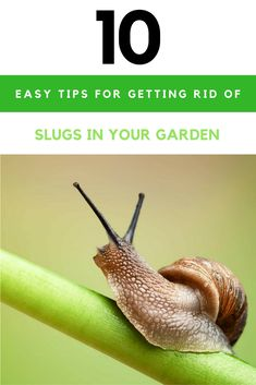 10 Easy Tips for Getting Rid of Slugs in your Garden