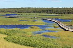 The floating boardwalk across Bowley Pond on Greenwich Dunes Trail at PEI National Park is a highlight experience.