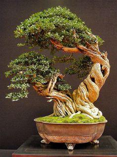 A Stunning Bonsai In A Gorgeous Antique Copper Container...    European bonsaï San Show 2013, Saulieu France