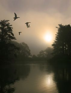 File:Flying Mallards and morning fog.jpg   Author: Two+two=4 This file is licensed under the Creative Commons Attribution-Share Alike 3.0 Unported: learn more about it on the website.