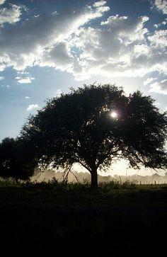 Campo , sky , cielo , arbol , naturaleza , life green