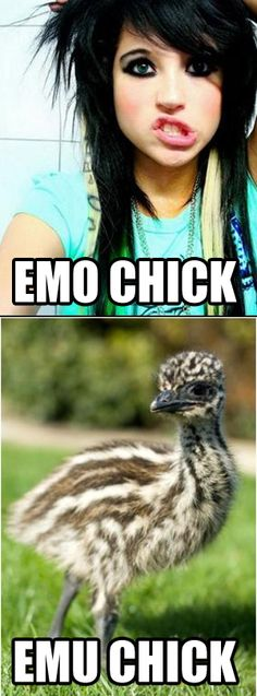 @Andrew Mager H Your picture is too funny! Emo (Emu) Chick :-)