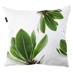 Scatter cushions | Indoor | clintonfriedman | collections Scatter Cushions, Throw Pillows, Graphic Patterns, Botanical Prints, Sweet Home, Collections, Indoor, African Style, Interior Design
