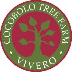 Cocobolo Tree Farm     Trebol, Macacauba, Macawood
