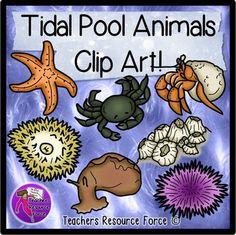 Tidal pool clip art - color & black line (sea star, shore crab, sea anemone, sea hare, sea urchin, barnacles, hermit crab)