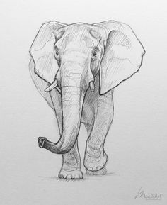 Sketchbook animal art Pencil drawing of an African elephant Realistic wildlife line art Endangered animals species Creative drawing ideas Practicing doodles Tattoo design idea madliart Realistic Animal Drawings, Realistic Sketch, Pencil Art Drawings, Art Drawings Sketches, Cute Drawings, Skull Drawings, Tattoo Drawings, Pencil Sketch Art, Realistic Elephant Tattoo