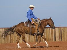 Horseman Ben Baldus finds that practicing for ranch versatility involves a routine that helps his horses understand their jobs for each event. Western Horseman, Ranch Riding, Warm Up Routine, American Quarter Horse, Horse World, Horse Training, Show Horses, Westerns, How To Memorize Things