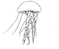 Drawing a jellyfish - Draw Central Jellyfish Drawing, Jellyfish Tattoo, Jellyfish Art, How To Draw Jellyfish, Jellyfish Decorations, Jellyfish Aquarium, Jellyfish Light, Fish Drawings, Art Drawings