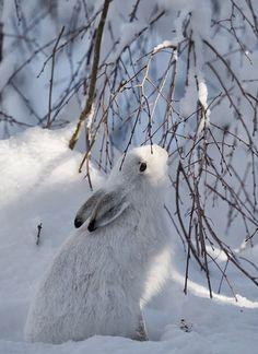 Winter...sweet...L.Loe