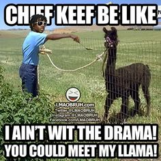 Chief Keef be like... I aint with the drama, you could meet my llama!