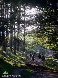 Sous les arbres...  Office du Tourisme d'Urrugne - Pays Basque www.urrugne.com