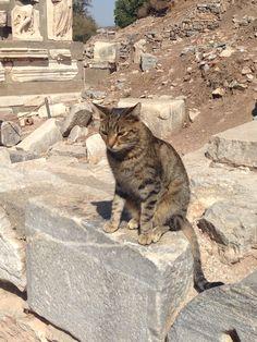 a cat @Ephesus