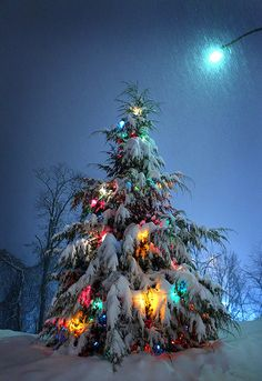 Snow covered Christmas tree with lights . . . great!