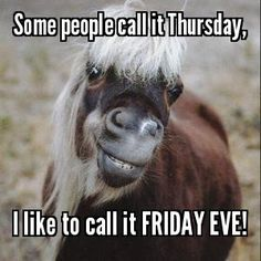 #Thursday #Humor #Pony