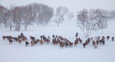 horse riding winter