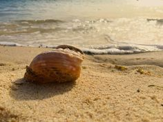Beach scenery sand shell nature waves photography