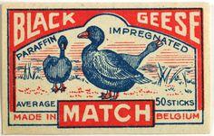 Black Geese Match - Belgium