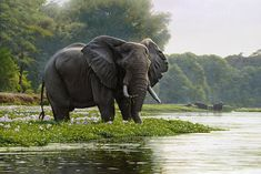 Jackson Hole Art Auction:  Zambezi Morning