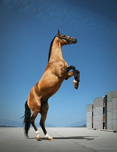 www.pegasebuzz.com | Equine photography : Andrey Vasilyev