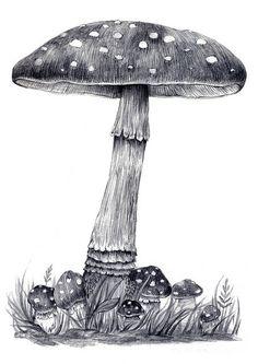 mushroom drawing~ Illustration Botanique, Botanical Illustration, Illustration Art, Mushroom Drawing, Mushroom Art, Pencil Art, Pencil Drawings, Art Drawings, Puzzle Photo