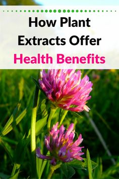 Plant extracts offer health benefits for many conditions