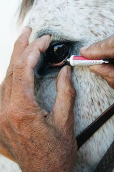 Tips for horse owners: Equine Eye Problems and Treatment advice from an equine veterinarian