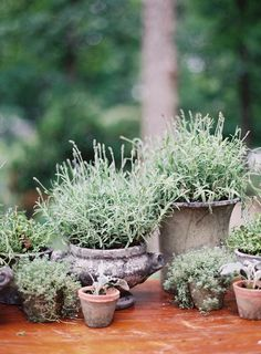 rustic potted herbs as centerpieces | rylee hitchner