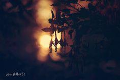 Aljaba www.facebook.com/fotosjimenadelmarmol
