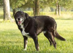 Signs Of Dog Arthritis? - Dogtime http://clclp.me/4QYT#utm_sguid=182606,a1119629-e6ed-9b7d-720f-df5d040cf8ed