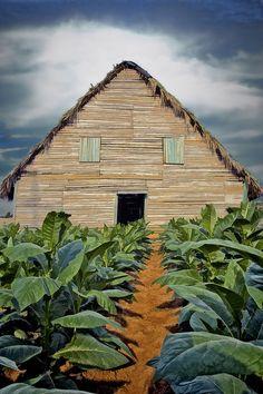 Tobacco Barn, Viñales, Pinar del Rio, Cuba