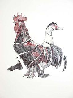 animal drawings - Google Search