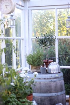 viinitynnyri,puutarha,vanha kahvipannu,yrttitarha,piha