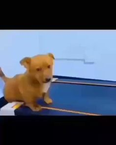 Funny Dog Memes, Funny Animal Memes, Funny Animal Videos, Cute Funny Animals, Funny Animal Pictures, Cute Baby Animals, Funny Videos For Kids, Funny Cute, Funny Dogs